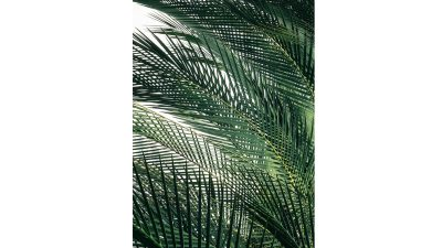 Outdoor Art - Palm Leaves
